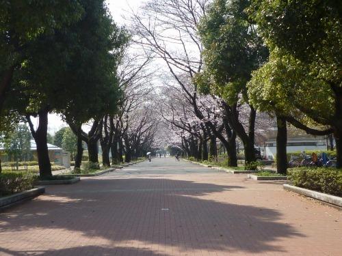 絶好の桜見_a0262093_18242720.jpg
