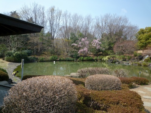 絶好の桜見_a0262093_18274023.jpg