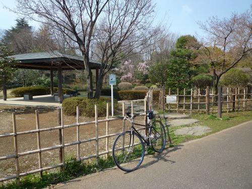 絶好の桜見_a0262093_18290342.jpg