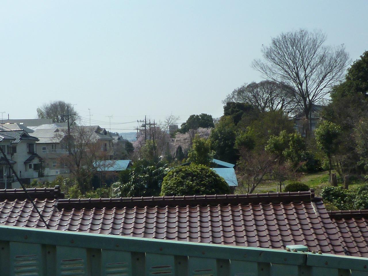 絶好の桜見_a0262093_18303940.jpg