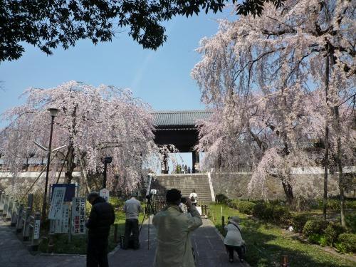 絶好の桜見_a0262093_18464619.jpg