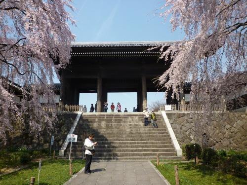 絶好の桜見_a0262093_18484774.jpg