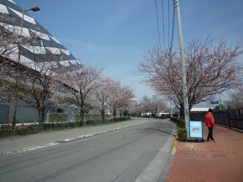絶好の桜見_a0262093_19023713.jpg