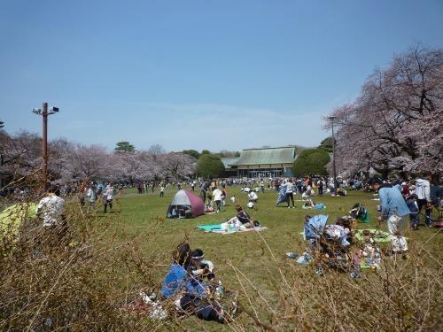 絶好の桜見_a0262093_19062141.jpg