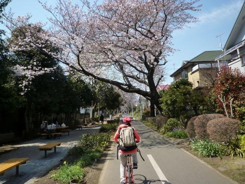 絶好の桜見_a0262093_19102611.jpg
