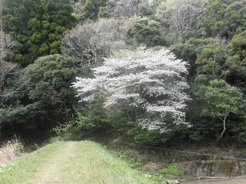 4月12日(水)晴れ_f0192504_18562543.jpg