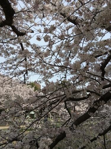 春の嵐_d0184114_08235140.jpg
