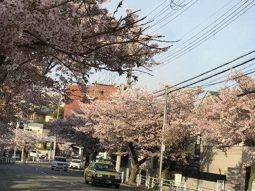 さくら・花は咲く・花の街…♪_f0223914_22560567.jpg