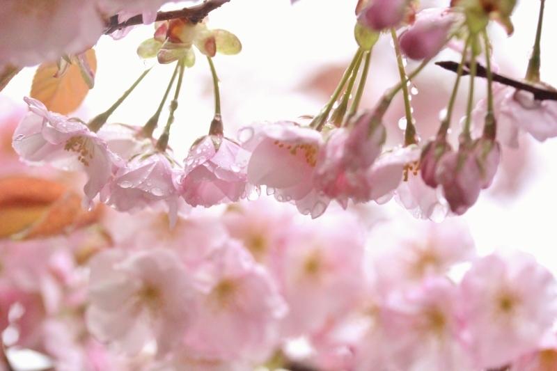 茶和や香(56)、六鹿茶遊会(45)_b0220318_00121017.jpg