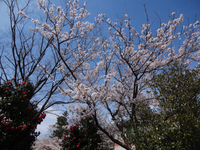 お花見(*^^*)_f0170422_08540932.jpg