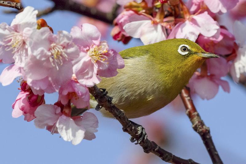 「ほっ」と。キャンペーン結果発表!小さい春・HOTランキング編_f0357923_12550448.jpg