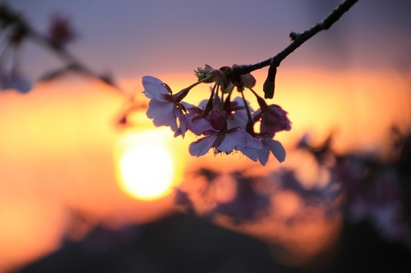 「ほっ」と。キャンペーン結果発表!小さい春・HOTランキング編_f0357923_12584167.jpg