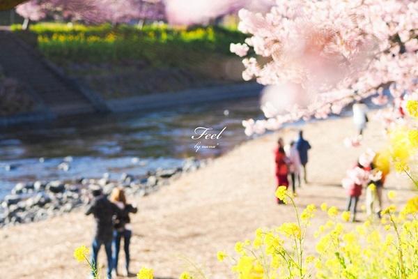 「ほっ」と。キャンペーン結果発表!小さい春・HOTランキング編_f0357923_12584214.jpg