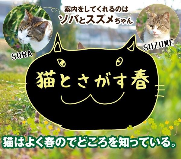 「ほっ」と。キャンペーン結果発表!小さい春・HOTランキング編_f0357923_19001420.jpg