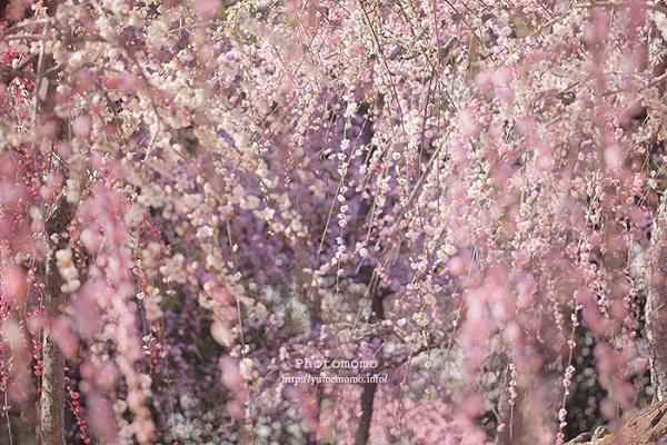「ほっ」と。キャンペーン結果発表!小さい春・HOTランキング編_f0357923_19012974.jpg