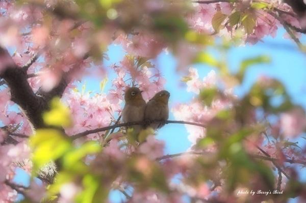 「ほっ」と。キャンペーン結果発表!小さい春・HOTランキング編_f0357923_20070253.jpg
