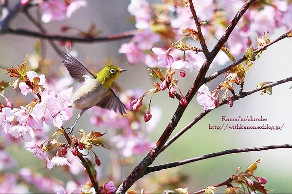 「ほっ」と。キャンペーン結果発表!小さい春・HOTランキング編_f0357923_20114802.jpg