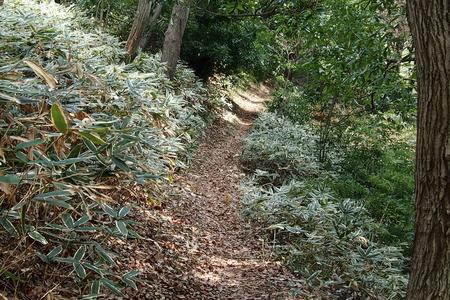 里山散歩_a0240026_20245223.jpg
