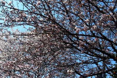 里山散歩_a0240026_2033034.jpg