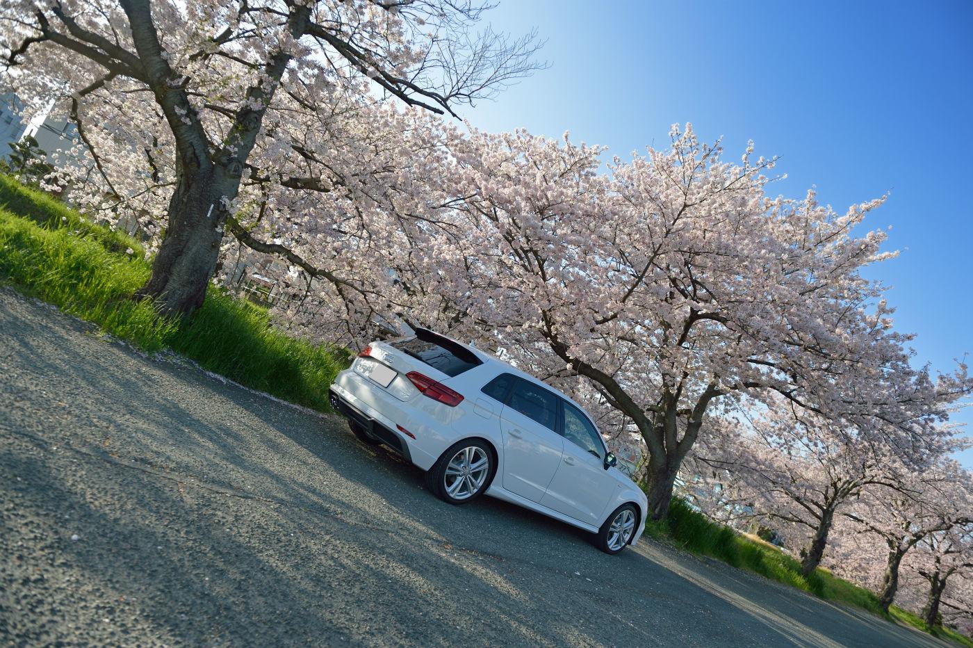 A3と桜_f0205834_23395882.jpg