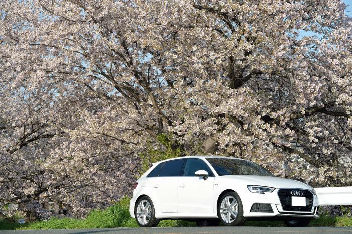 A3と桜 その2_f0205834_23401871.jpg
