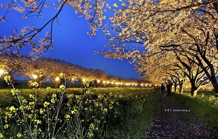 草場川ライトアップ_f0315034_13130062.jpg