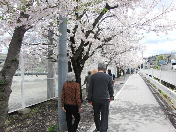 お花見 ~ 春の歩行訓練週間 ~_e0222340_15355059.jpg