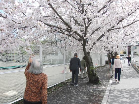 お花見 ~ 春の歩行訓練週間 ~_e0222340_15422869.jpg