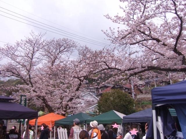 ふんわり満開の桜と 第21回おのみち手しごと市_a0306166_16295384.jpg