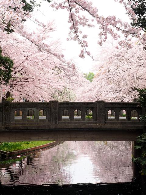 清雲寺の枝垂れ桜_d0358793_00002769.jpg