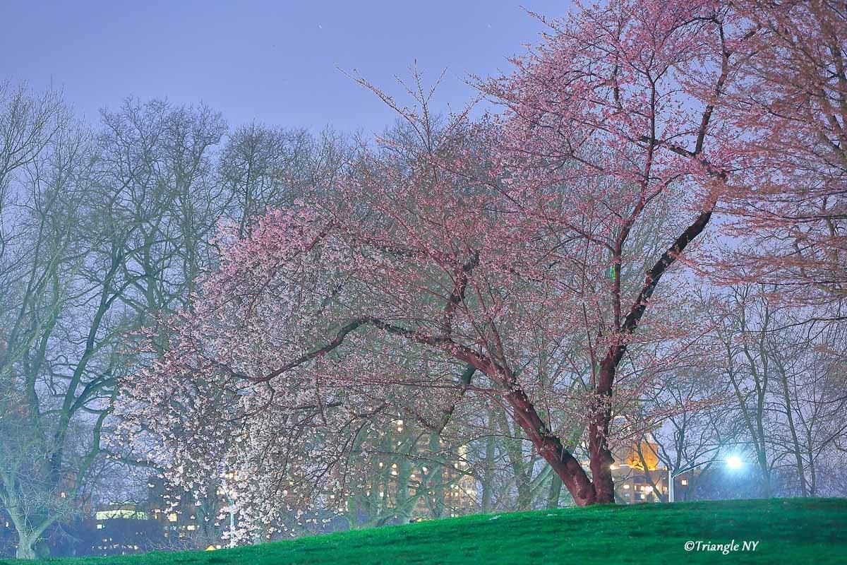静寂の夜桜_a0274805_23411090.jpg
