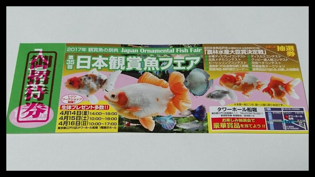 エサへの反応と、明日から観賞魚フェア。_b0298605_11172661.jpg
