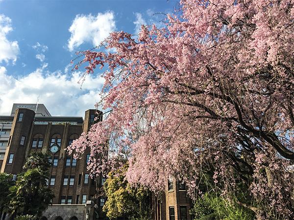 白金台の桜!_b0194208_21555353.jpg