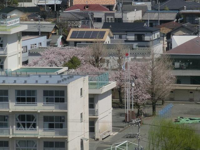 桜がやっと満開 でも今日あたりから「落花盛ん」?_f0141310_07553366.jpg