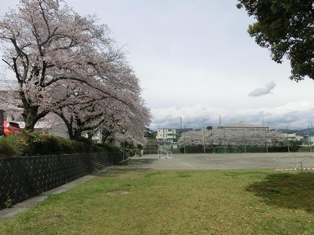 桜がやっと満開 でも今日あたりから「落花盛ん」?_f0141310_07564298.jpg