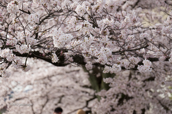 日曜日、足羽川を散歩_d0192712_19140307.jpg