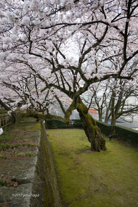 日曜日、市内を散歩。グリフィスと福井城_d0192712_19171330.jpg