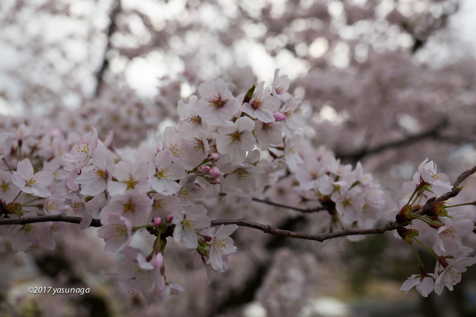 日曜日、市内を散歩。グリフィスと福井城_d0192712_19171898.jpg