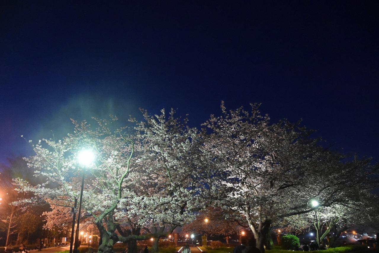 ヴェルニー公園の桜 6_d0065116_22430768.jpg