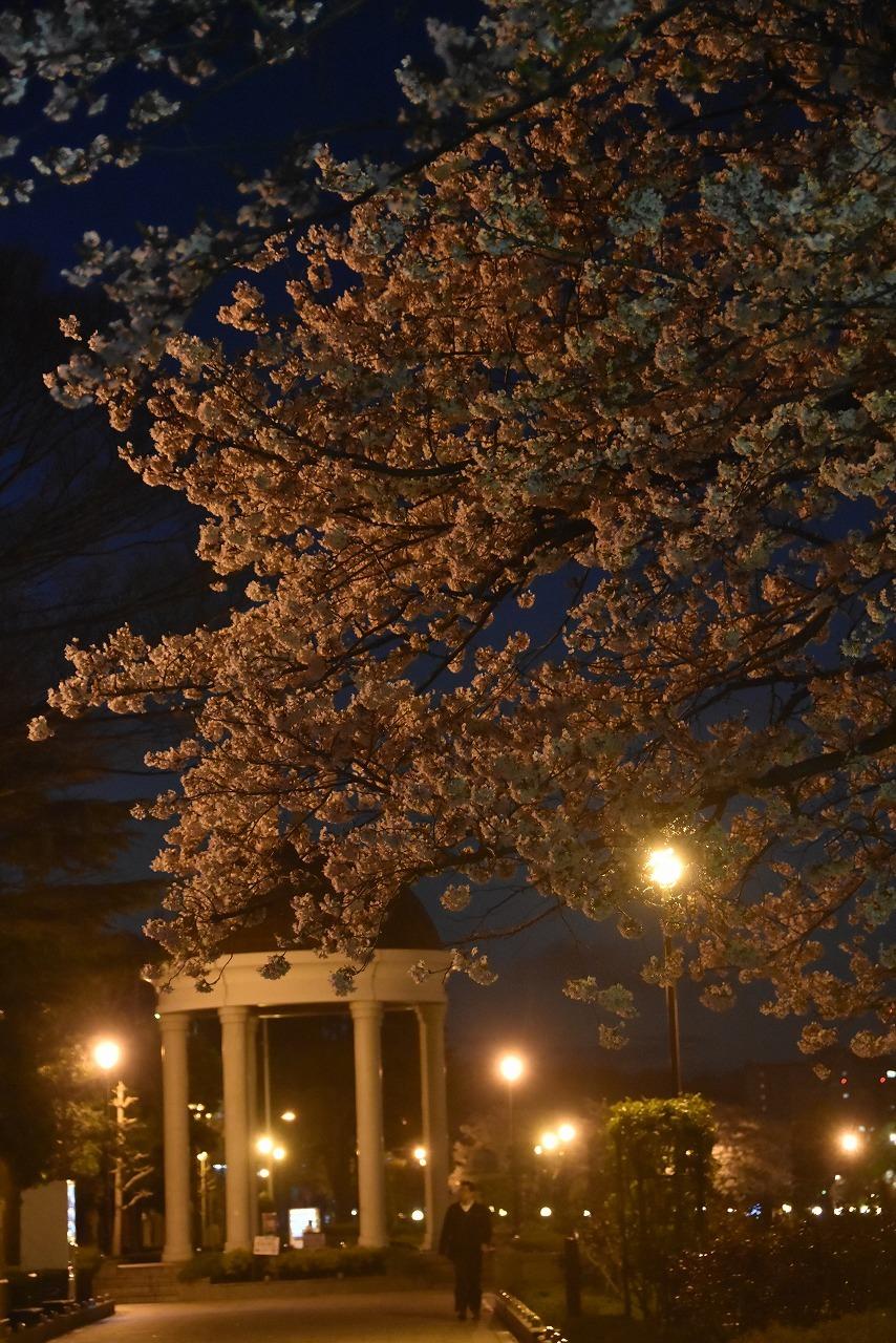 ヴェルニー公園の桜 6_d0065116_22433722.jpg