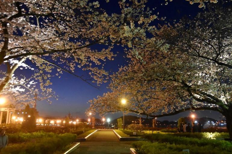 ヴェルニー公園の桜 6_d0065116_22450554.jpg