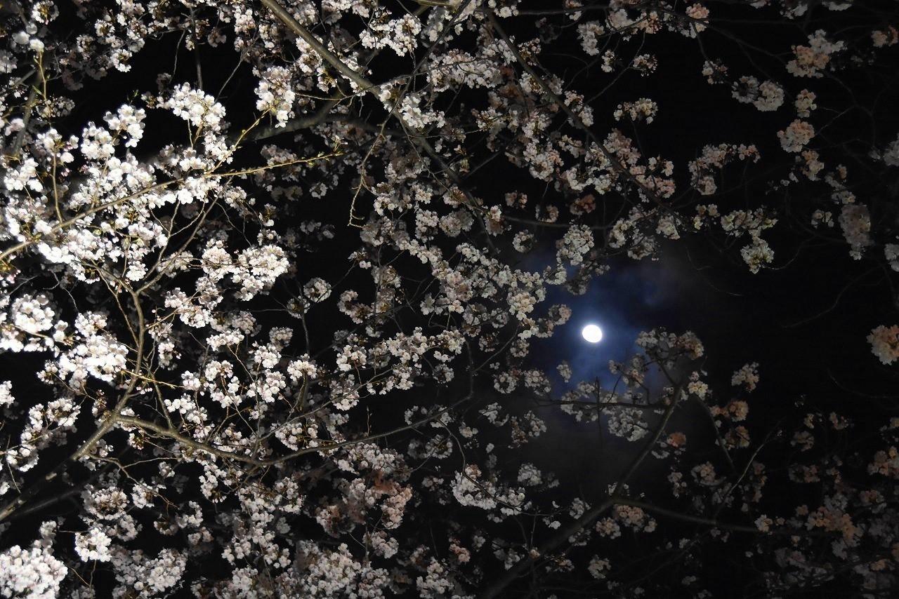 ヴェルニー公園の桜 6_d0065116_22454302.jpg