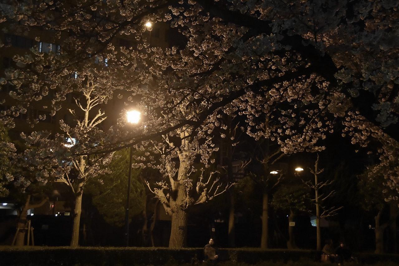 ヴェルニー公園の桜 6_d0065116_22464662.jpg