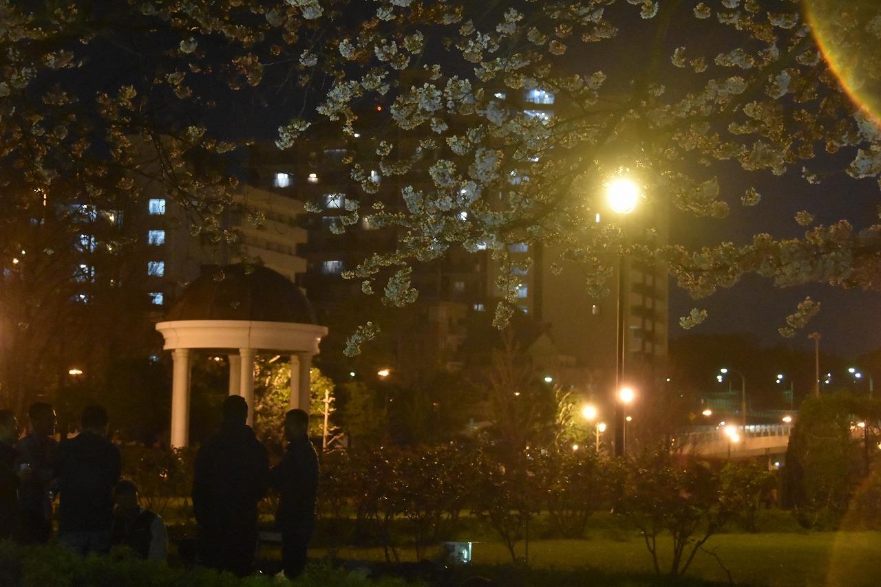 ヴェルニー公園の桜 6_d0065116_22474947.jpg
