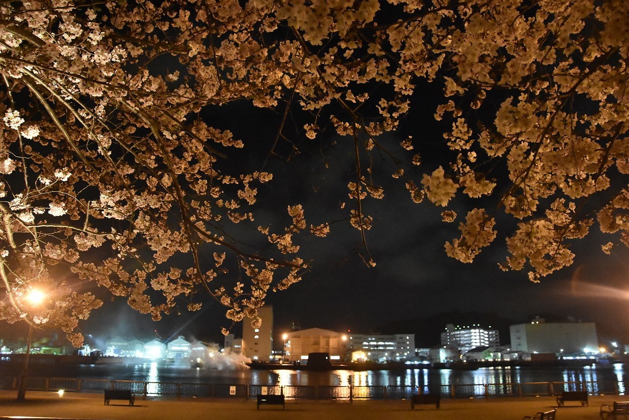 ヴェルニー公園の桜 6_d0065116_22494293.jpg