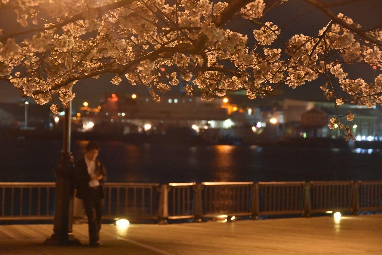 ヴェルニー公園の桜 6_d0065116_22503039.jpg