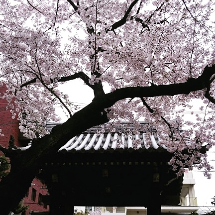4月のおしらせ_f0190816_024592.jpg