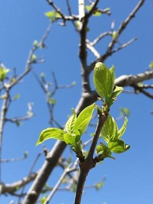 美しい季節_b0100229_15391205.jpg