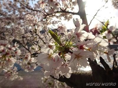 b0069630_20111926.jpg