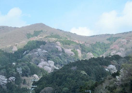 春の山をドライブ_b0177436_2156295.jpg